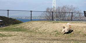 Dog run at Awaji Service Area
