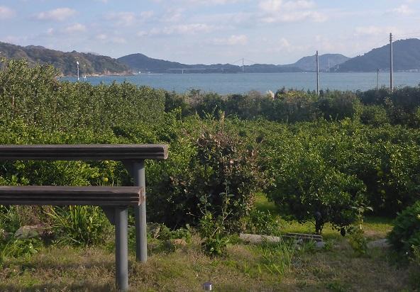 庭から伯方・大島大橋が正面に見えます