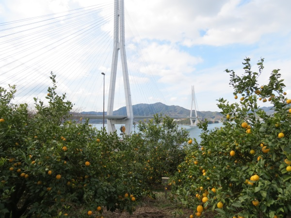 多々羅大橋とレモン