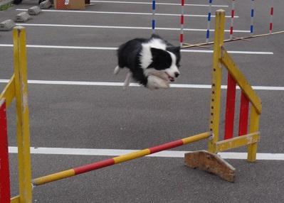 災害救助犬のデモンストレーション