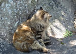 1匹目のネコ