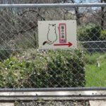 「猫の街 尾道」