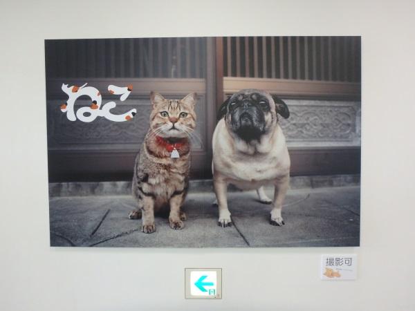 仲良く並んだ猫と犬