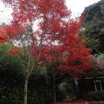 晩秋のマイントピア別子で紅葉を楽しみました
