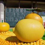 「♡するレモンの島」で、せとだレモン祭。